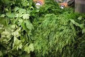 Bunches of dill and parsley — Stock Photo