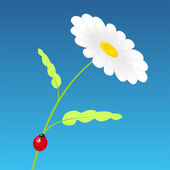 Chamomile — Vector de stock