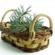 Wattled basket with fir-tree branches — Stock Photo #15476437