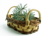 Wattled basket with fir-tree branches — Stok fotoğraf