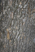 Oak Bark Background — Stock Photo