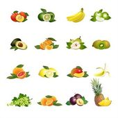 Fruits. Vector. — Stockvector