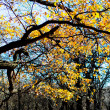 Autumn trees — Photo