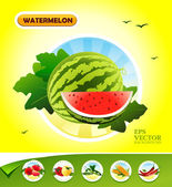 Vector vegetables. Watermelon — Stock Vector
