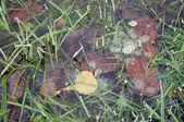 Leaf frozen in ice — Stock Photo