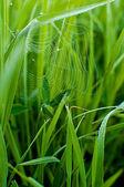 Cobweb  on grass — Stock Photo