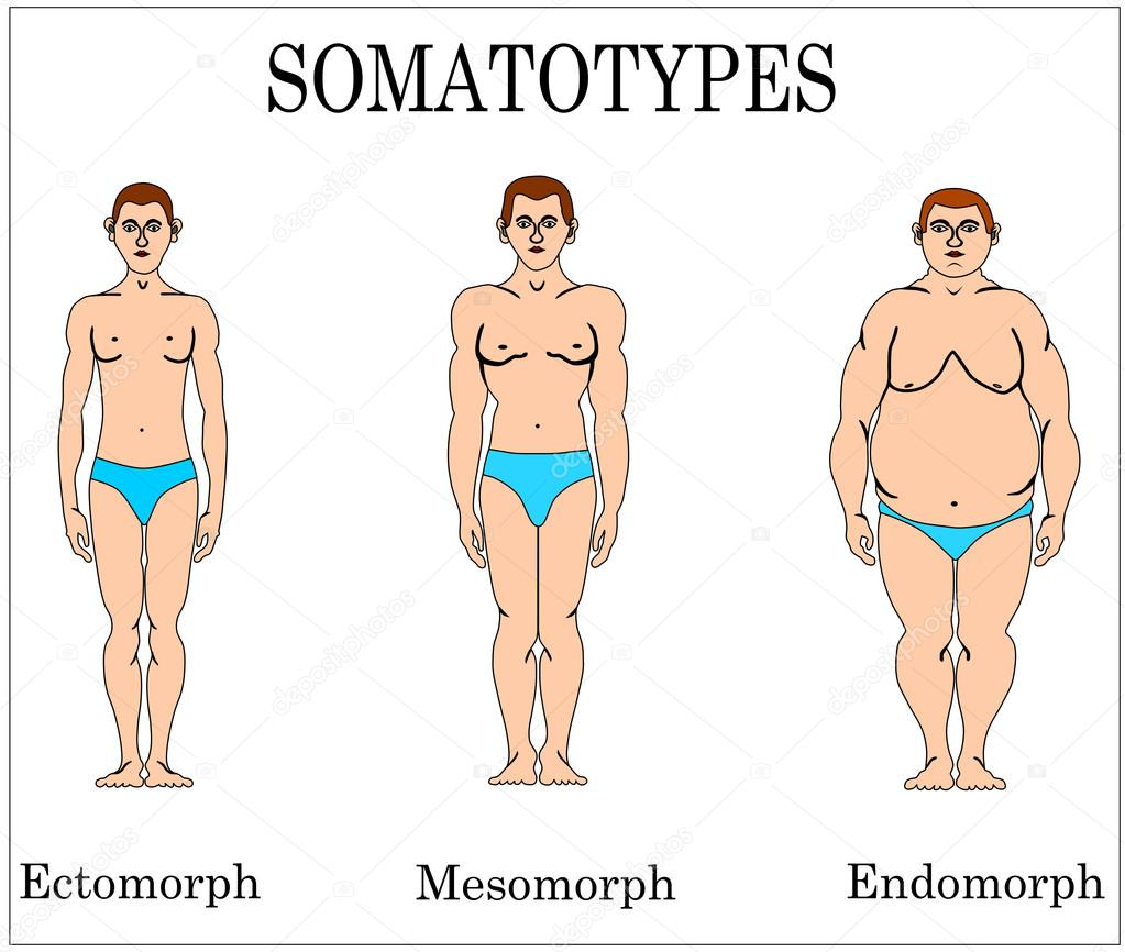 Three Types of Bodies Three Basic Types of Male