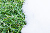 Grass and snow — Stock Photo