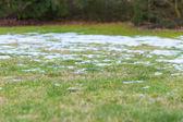 春の牧草地 — ストック写真