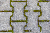 Cobblestone with moss. — Stock Photo