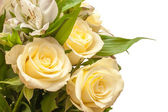 Roses isolated — Stock Photo