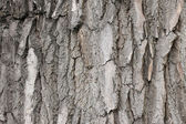 Gray bark — Stock Photo
