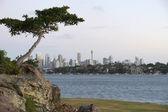 Sydney — Stockfoto