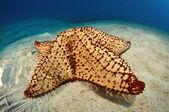 Starfish in the Sand — Stock Photo