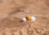 Seashells on the sand — Stock Photo