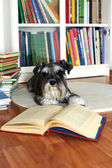 Lecture d'un livre de chien — Photo