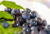 Wet blueberries in a bowl — Stock Photo
