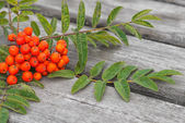 Red rowan and leaf on a table — Stock Photo