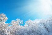 Sunlight over oakforest during winter — Stock Photo