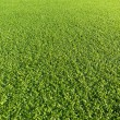 Artificial Grass Field — Stock Photo #24949917