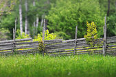 Summer meadow with a wooden fence — Stock Photo