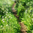Beautiful curvy path — Stock Photo