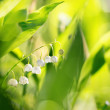 Lily of the valley with shallow focus — Stock Photo #26896859