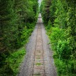 Railway track through a green forest — Stock Photo