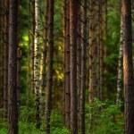 coucher de soleil dans les bois — Photo #27434357