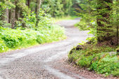 Winding country road in forest — Stockfoto