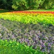 Flowerbed in colors of the rainbow in a Stockholm park during summer — Stock Photo