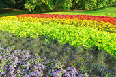 Flowerbed in rainbow colors in Stockholm during a late summerday — Stock Photo