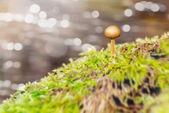 Small mushroom on a stone — Stock Photo