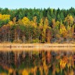 Autumn forest with reflections in a lake — Stock Photo