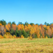 Field of grass with an autumn forest — Stock Photo