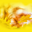 Maple leaf on yellow background — Stock Photo