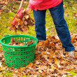 Autumn leaves put in a green basket — Stock Photo
