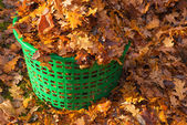 Basket full of autumn leaves — Stock Photo