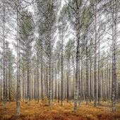 Autumn woodland scene — 图库照片