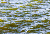 Detail of fresh brackish green water — Stock Photo