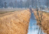 Irrigation water channel in a rural landscape — Stock Photo
