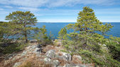 Shoreline thru some pine trees — Foto de Stock