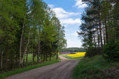 Countryroad с желтым rapefields — Стоковое фото
