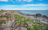 Coastline with grass between the stones — Stock Photo
