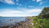 Shoreline in the baltic sea during summer — Stock Photo