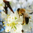 Stock Photo: Bee On Tree