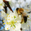 Bee On Tree — Stock Photo #13608669