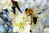 Bee On a Tree — Stock Photo