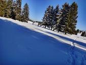 Winter day 2 — Stock Photo