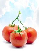 Fresh Tomato Fruits — Stock Photo